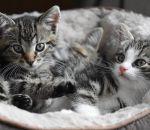 Распространение шизофрении в Москве связали с кошачьими паразитами