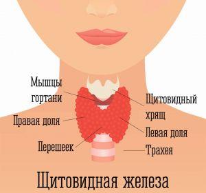 Заболевания щитовидной железы — признаки патологии, методы лечения