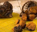 Чайный гриб – полезные свойства, способы применения и противопоказания