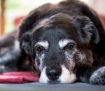 Спондилез — причины, признаки, симптомы и лечение