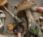 «Медицинские» грибы укрепляют иммунитет