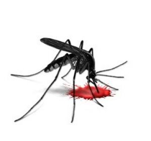 Опасен ли укус комара?