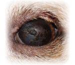 Синдром сухого глаза — причины, симптомы и лечение высыхания поверхности роговицы