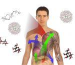 Медь в организме человека: ее роль, как проявляется недостаток, медь в продуктах