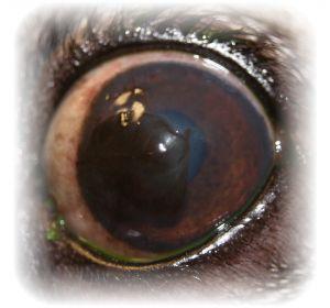 Потемнение в глазах – причины, диагностика и лечение