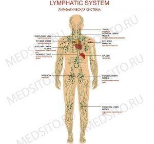 Увеличение лимфоузлов в паху: причины, симптомы, фото и лечение
