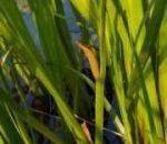 Крапива — лечебные свойства и противопоказания листьев или корней, показания, рецепты народной медицины