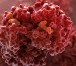 Эритроцитоз — причины, признаки, симптомы и лечение