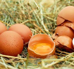 Можно ли есть яйца с трещиной?