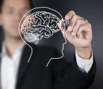 Сканирование мозга после рождения позволяет определить степень риска нарушения развития ребенка
