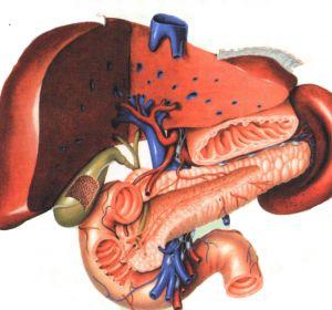 Бескаменный холецистит: причины, признаки, симптомы, лечение