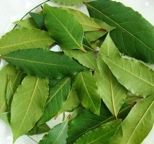 Полезные свойства и применение лаврового листа