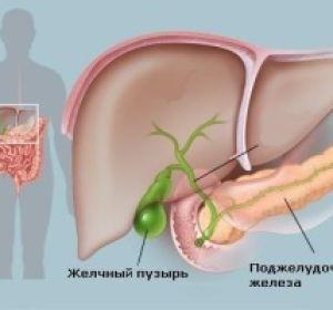 «Овесол»: защита печени и желчевыводящих путей