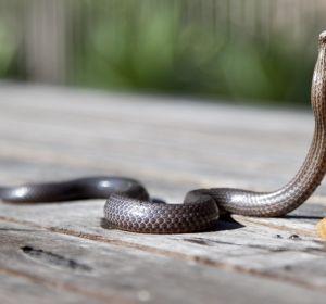 Дневник смерти: врач задокументировал последние часы жизни после укуса змеи