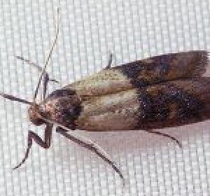 Народные средства от глистов — как избавиться от паразитов травами, препаратами с медом или клизмами