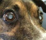 Причины бельма на глазу у человека — врожденные и приобретенные с описанием и фото