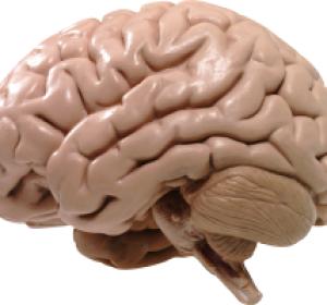 Что такое лобно-височная деменция, лечится ли она?
