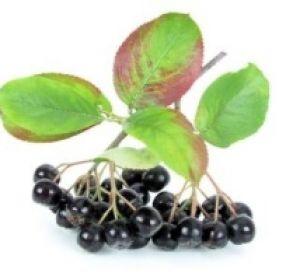Польза черноплодной рябины: здоровое сердце и крепкий иммунитет!