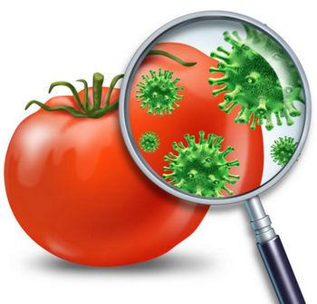 Вирусы на помидоре