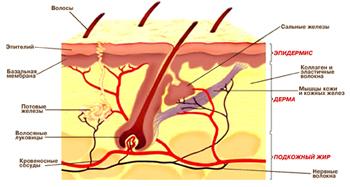 Причины жирного себорейного дерматита