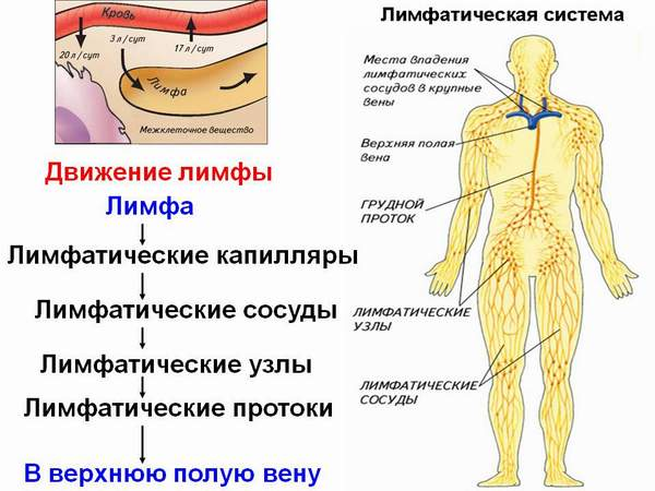 Техника проведения массажа ЛИМФА