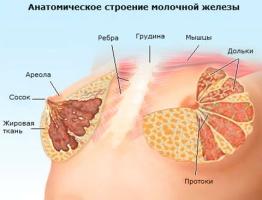 Молочная железа и ее строение.