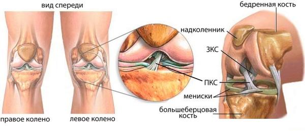 Расположение внутрисуставных связок
