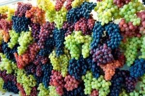 Большое количество винограда
