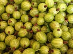 Много зеленых ягод крыжовника