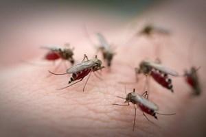 Много комаров сидят на теле
