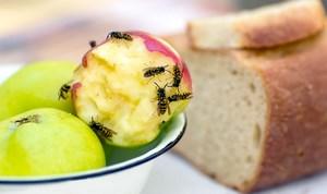 Осы сидят на яблоке
