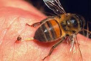 Пчела сидит на теле у человека