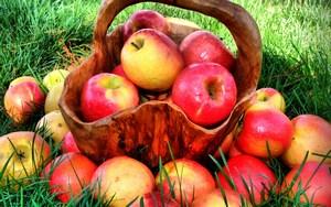 Яблоки в корзине и на траве