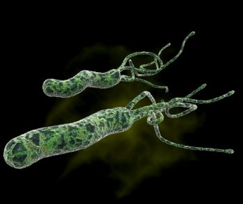 Как выглядит бактерия Хеликобактер