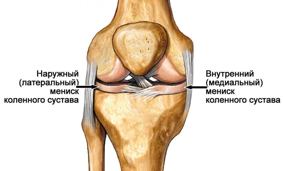 Строение коленного сустава. Внутренний и наружный мениск колена