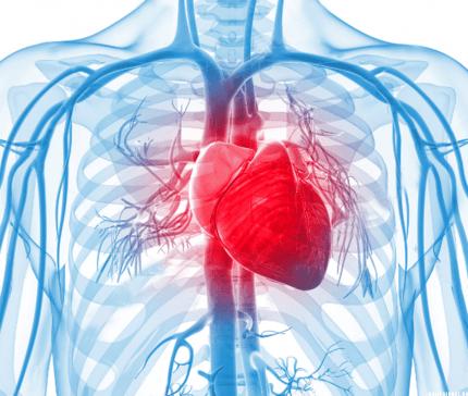 Острая и хроническая сердечная недостаточность