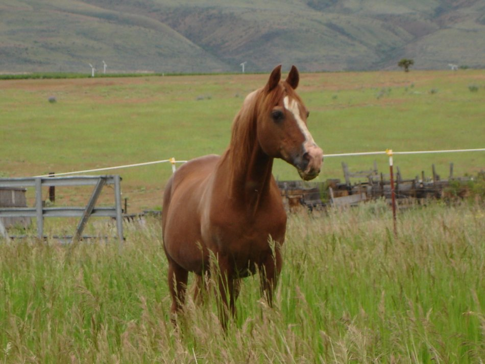 Метеоризм кишечника у лошади