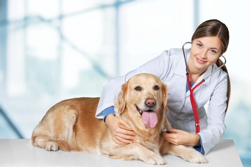 Паховая грыжа у собак: причины, симптомы и лечение