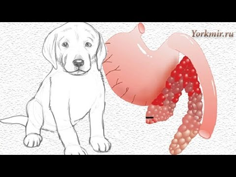 Панкреатит у собак: симптомы и лечение