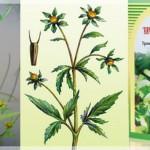 Лекарственные травы от детских болезней: череда