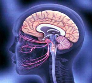 разрушение мозговых оболочек