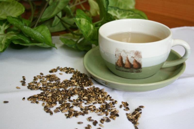 Расторопша пятнистая (чертополох молочный): лечебные свойства и особенности применения