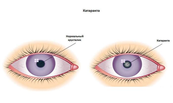 Витафакол глазные капли цена