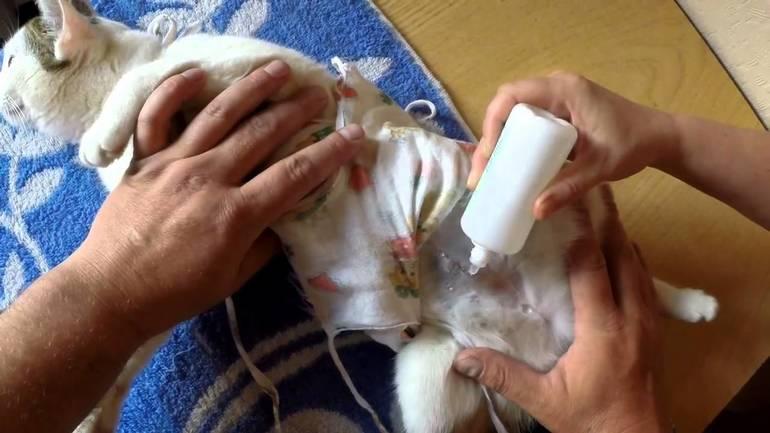 Как лечить мастит у кошек