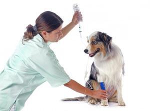 Лечение панкреатита у собак