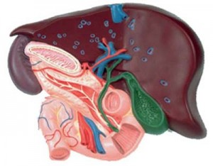 Лечение хронического холецистита - медцентр