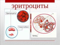 Эритроциты в моче – что это значит? Эритроциты в моче повышены – причины у женщин