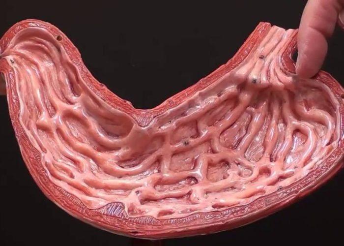 Повреждения слизистой оболочки желудка