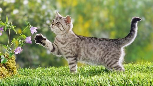 болезни почек у кошек (почечная недостаточность)