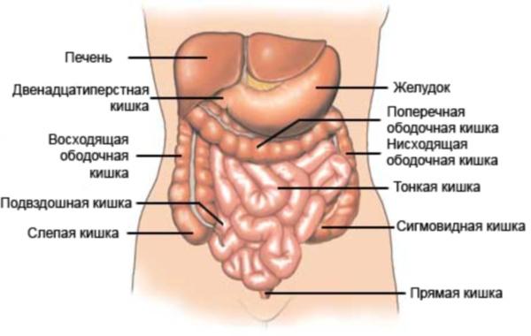 паразиты у человека как вывести